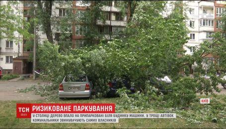 У столиці люди сперечаються із комунальниками через дерево, яке пошкодило кілька авто