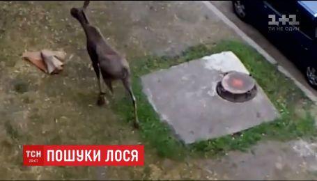 В столице спасатели устроили поиски дикого животного, которое испугало горожан