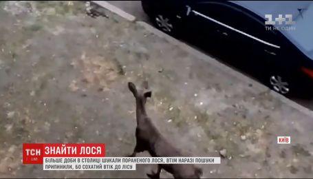 В Киеве прекратили поиски раненого лося
