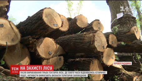 На Кировоградщине вырубили три гектара леса недалеко от места исторического боя Николая Скляра