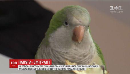 На территории посольства США в Киеве нашелся зеленый попугай