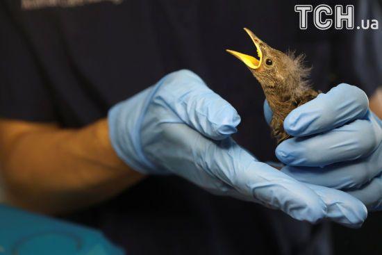 Кумедні малюки та врятовані птахи: у Нью-Йорку пернаті знайшли притулок від травм міста