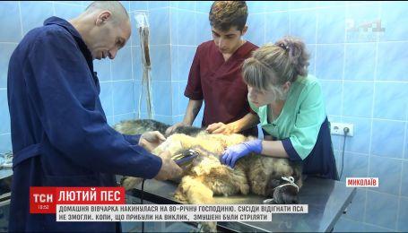 В Николаеве решают судьбу овчарки, которая едва не загрызла до смерти свою хозяйку