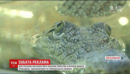В одном из Хмельницких магазинов в качестве рекламы используют крокодила в аквариуме