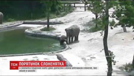 В южно-корейском зоопарке двое слонов устроили операцию по спасению слоненка