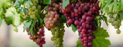 Коблево: крупнейшие виноградники Украины и секреты изготовления вина