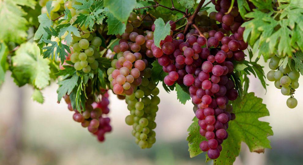 """Окупанти продають одне з найстаріших виноробних підприємств Криму """"Новий Світ"""""""