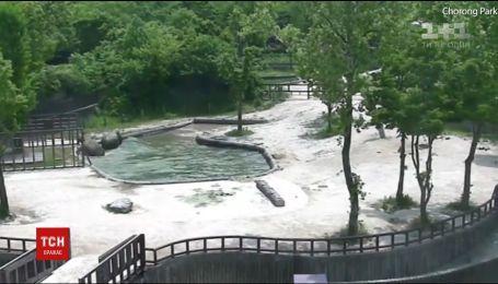 Двое слонов совместными силами спасли маленького слоненка из воды в южно-корейском зоопарке