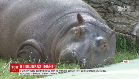 У столичному зоопарку обирають ім'я для маленької бегемотихи