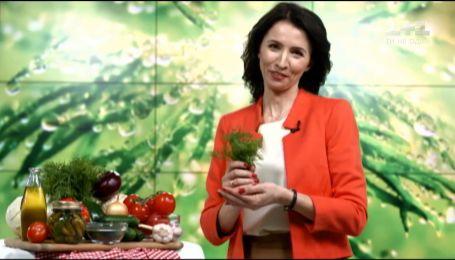 Дієтолог Галина Незговорова розповіла про користь кропу
