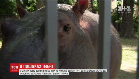 У Києві обирають ім'я 300-кілограмовому дитинчаті бегемота