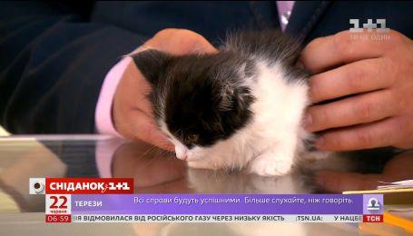 Двомісячне кошеня Джек шукає родину
