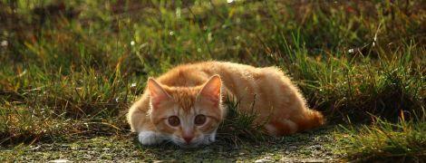 У Києві заборонили відловлювати безпритульних котів