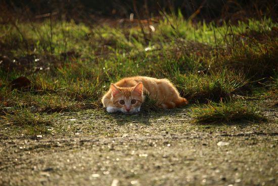 Нескінченне муркотіння: в Інтернеті з'явився сайт із котячими нявчанням