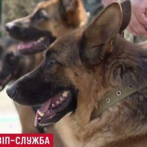 """В президентскую охрану """"набрали"""" овчарок-бодигардов"""