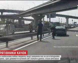 Семья уток парализовала движение на столичном шоссе
