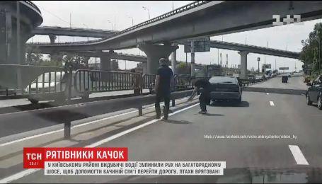 Родина качок паралізувала рух на столичному шосе