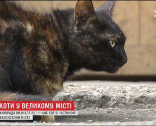 Часть экосистемы: Киевсовет запретил выгонять кошек с подвалов домов