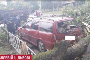 Ураган во Львове: непогода сорвала провода и повалила деревья