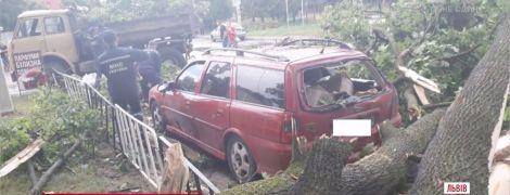 Буревій у Львові: негода позривала дроти і повалила дерева