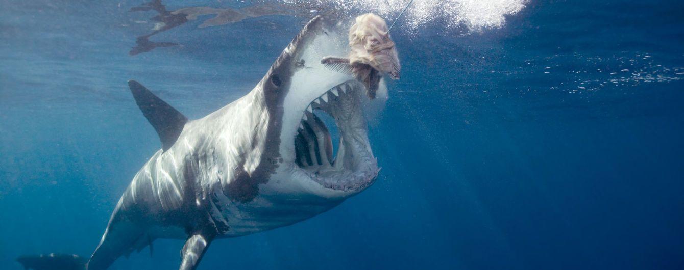Ужасающий трюк: австралийский серфер проплыл над челюстями акулы