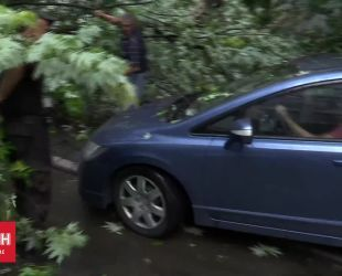 У Києві під час сильного дощу дерево привалило автівку