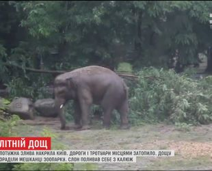 Бегемотиха и слон из столичного зоопарка не могли нарадоваться мощному ливню