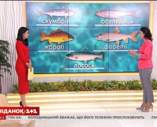 Говоримо про корисні властивості риби і правила її споживання з дієтологом Галиною Незговорою