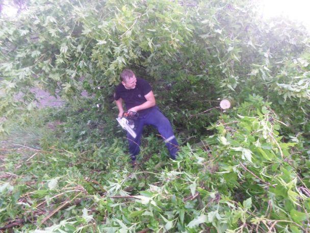 На Київщині потужний буревій повалив дерева, електроопори та позривав дахи у десятків будинків