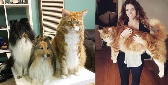 Оголений забіг на регбі та Instagram кота-велетня. Тренди Мережі