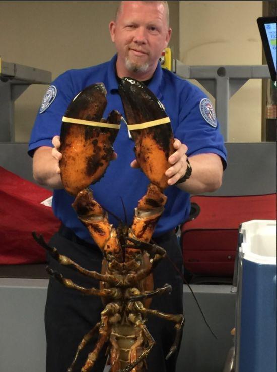 Працівник аеропорту Бостона показав велетенського лобстера у багажі пасажира