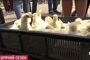 Червоний Хрест повіз на Донбас сотні курчат