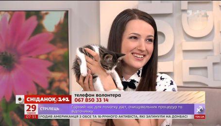 Выпускница Медиашколы 1+1 призывает спасать бездомных животных