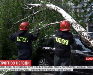 Из-за ливней и шквального ветра в Польше поваленные деревья и обесточены дома