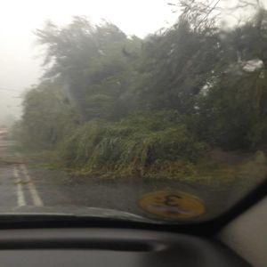 Луцк страдает от бури: поваленные деревья перекрыли проезд по дорогам города