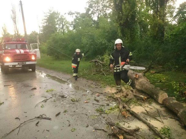 Украина: дерево упало на девушку в результате чего она скончалась