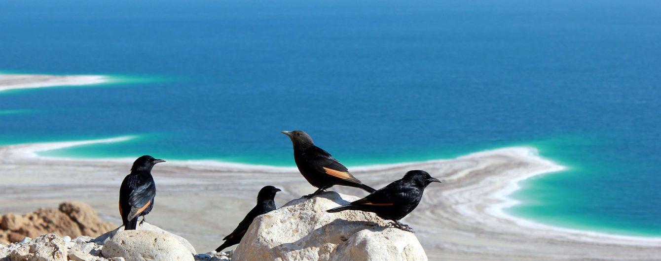 Секреты Мертвого моря. Молодильный эликсир и восстановление нервной системы