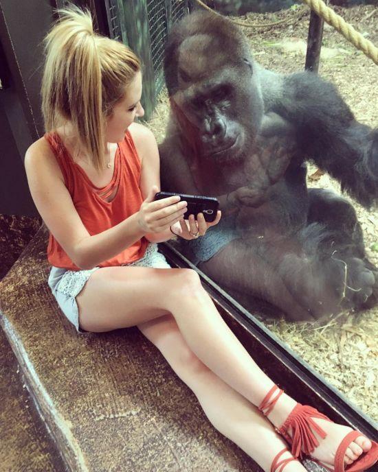 Американка разом з горилою переглянула в Мережі зворушливі відео