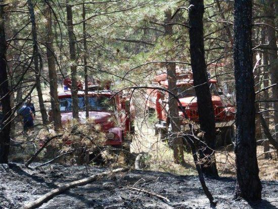 На Херсонщині палає великий ліс: вогонь довелося гасити з допомогою гелікоптерів та літака