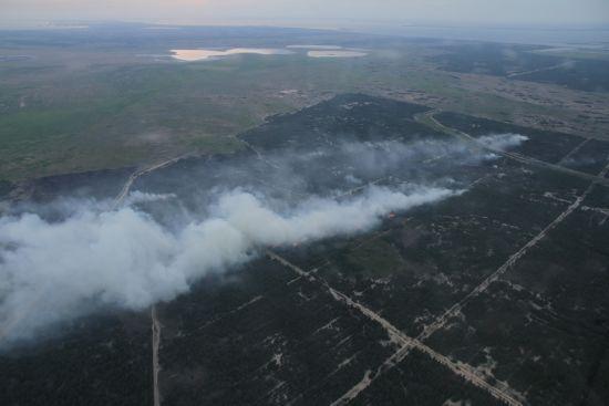 Масштабну лісову пожежу на Херсонщині допоміг приборкати дощ