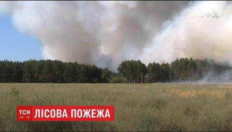 На Херсонщине удалось ликвидировать лесной пожар площадью в 20 гектаров
