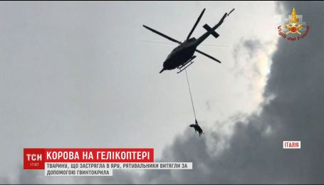 У Італії влаштували рятувальну операцію із гелікоптером задля спасіння корови