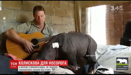Інтернет підкорило відео, на якому маленький носоріг засинає під колискову