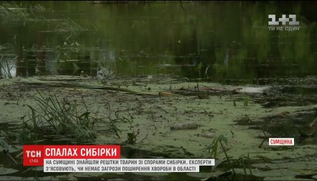 Неподалеку одной из школ Сумщины нашли останки животных со спорами сибирской язвы