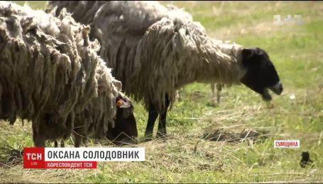 Небезпечна знахідка: на Сумщині планують перевірити поховання заражених сибіркою тварин