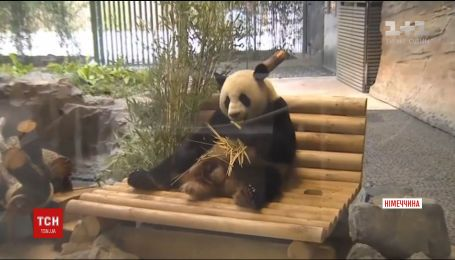 В Берлинском зоопарке торжественно открыли площадку для панд