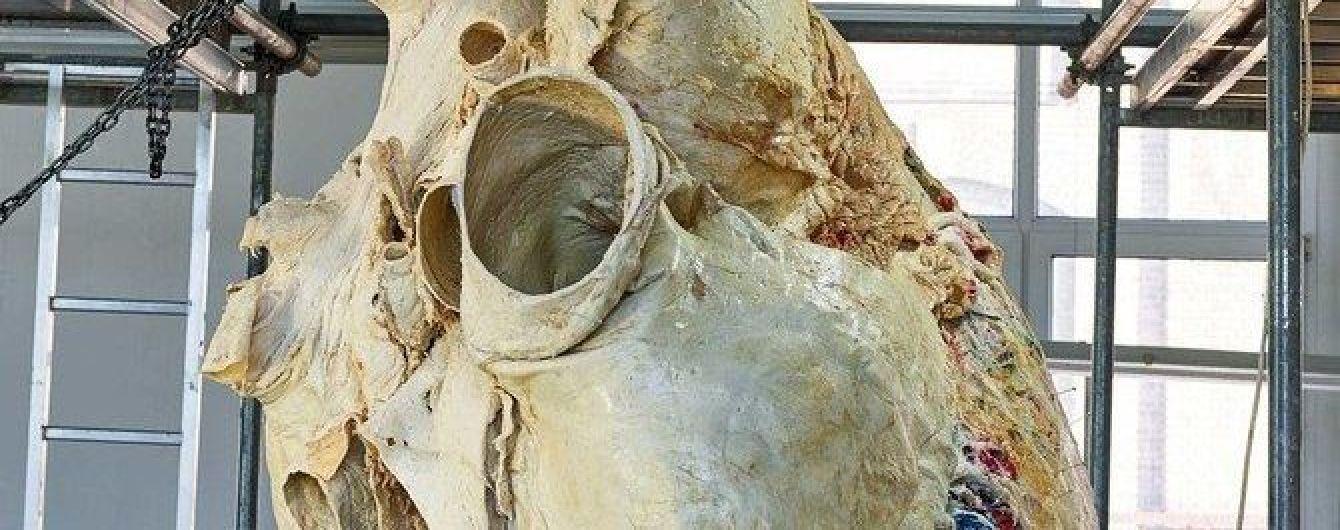 У канадському музеї показали найбільше серце у світі