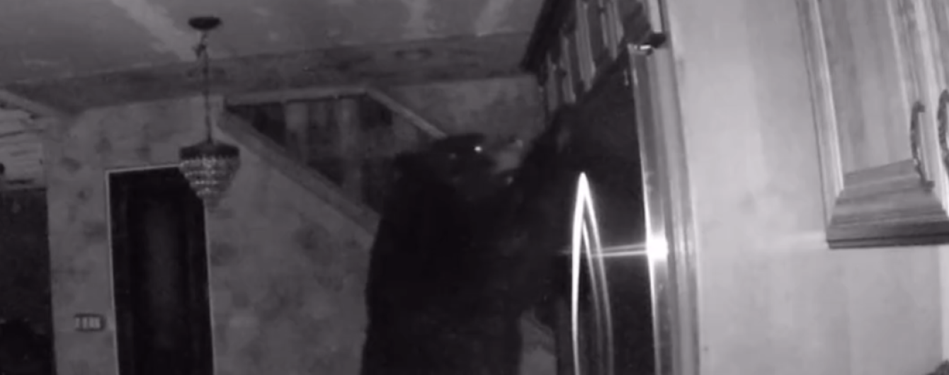 """У США велетенський ведмідь вдерся до будинку для """"вечері"""", поки господар  міцно  спав"""
