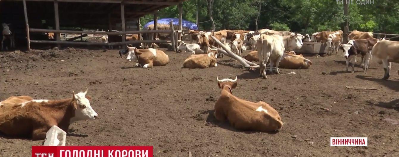 """На Вінниччині селянська родина влаштувала """"концтабір"""" для худоби"""