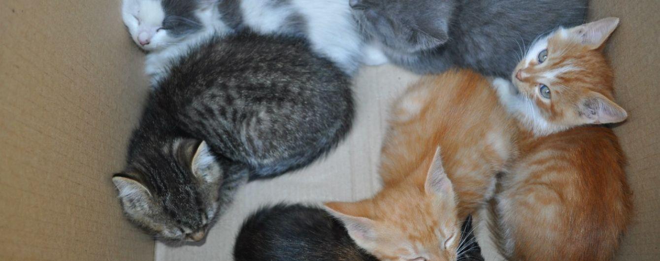 В подозрительной коробке в харьковском метро вместо бомбы нашли котенка